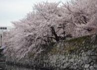"""2014年""""桜""""開花予想時期、花見の名所、場所、ランキングを公開します。梅の名所も同時に公開します。(中国、四国)"""