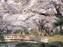 """2015年版北陸、甲信越""""桜""""花見名所、開花時期、場所、スポットを公開します。金沢などお勧めです。"""